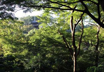 """五感で四季を感じ、癒しを体感""""ホテル椿山荘東京の庭園"""""""
